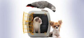 Pet Shipping | Pet Relocation Services | Pet Movers